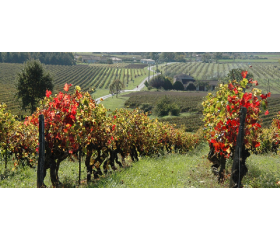 Naissance d'un vin - Domaine du Moulin